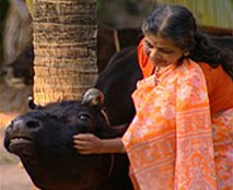 Hindu lady with cow